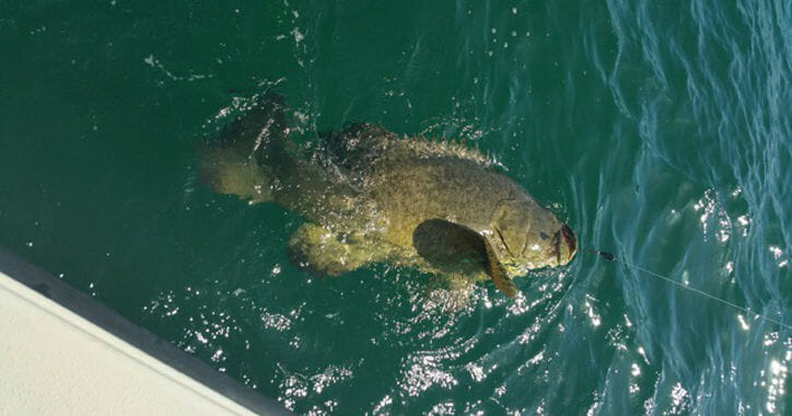 Florida Grouper Fishing Trips