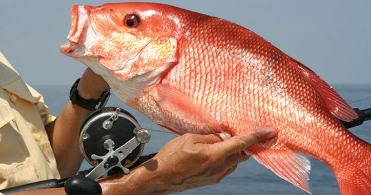 South Florida Snapper Fishing Guides