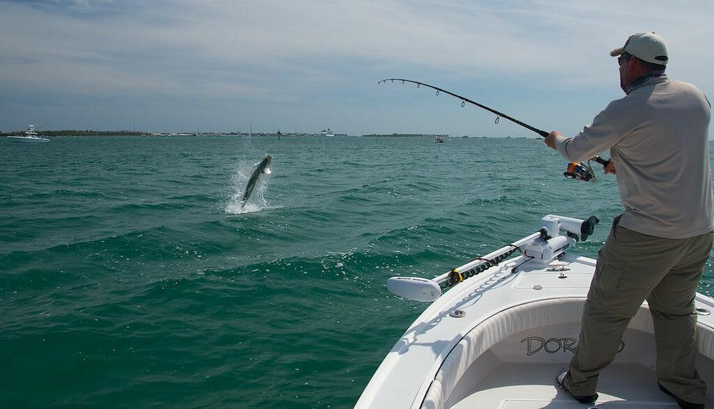 Naples Tarpon Fishing Charters | Backwater and Near Fishing